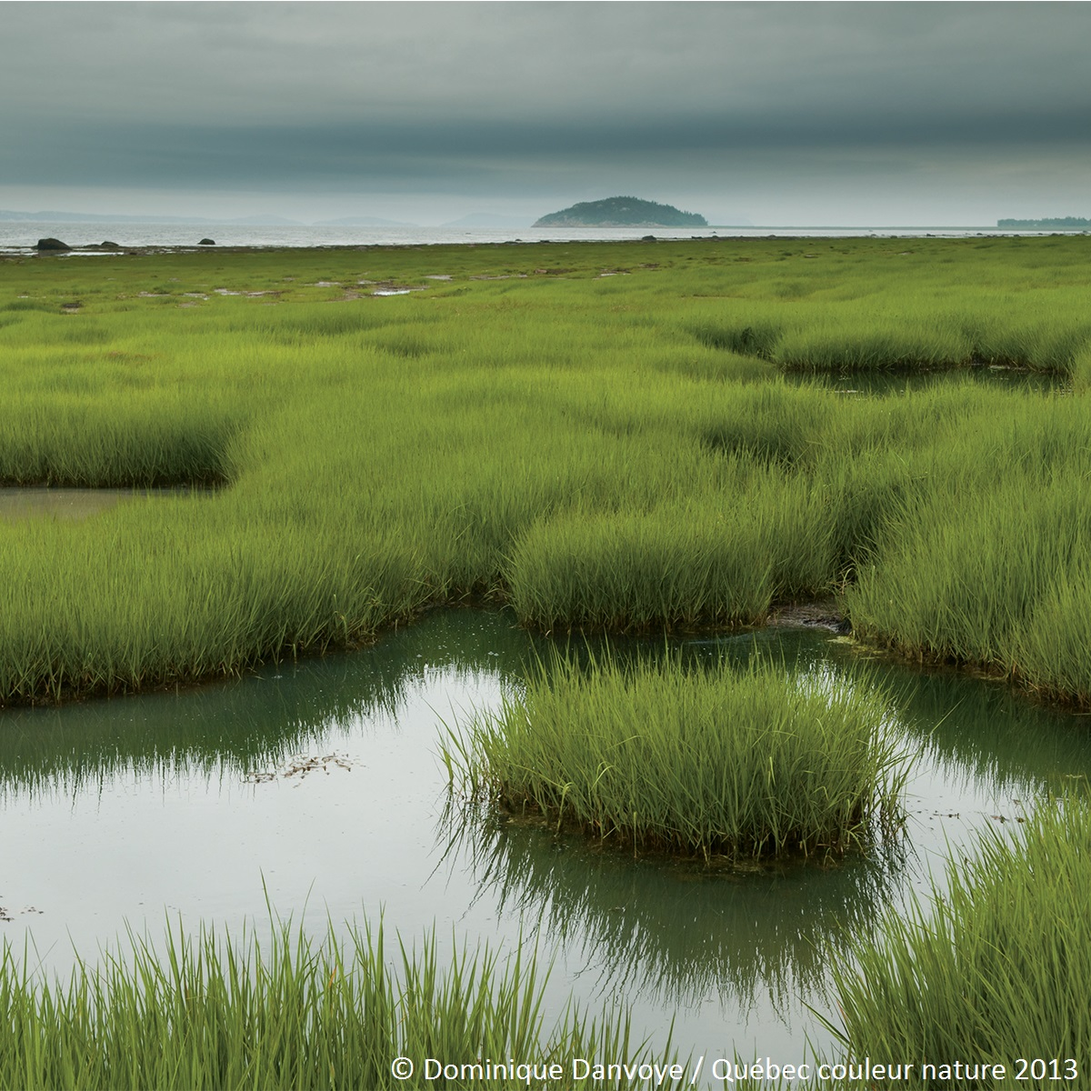 Milieu humide à l'île-aux-Coudres